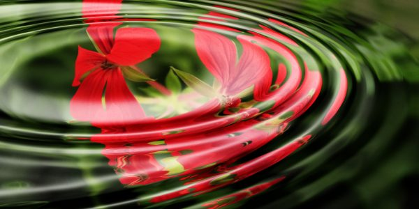 geranium-wave-water-rings-55813